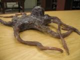 octopus02