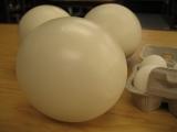 ostrich_eggs16