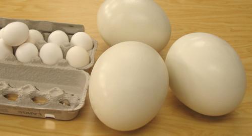 Ostrich_Eggs_1